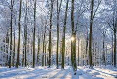 Light Up (anne_schneidersmann) Tags: trees winter sun sunlight snow cold ice forest germany deutschland woods frost sony frosty crisp sonne wald bume rheinland pfalz sunstar anneschneidersmann