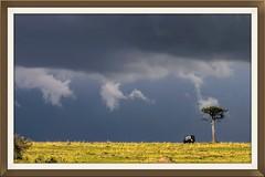 Kenya - Looks like rain (PIX SW) Tags:
