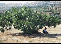 agrigento23 (whirling_dervish) Tags: magnagraecia sicily sicilia agrigento valledeitempli akragas provinciadiagrigento regionesiciliana girgenti vaddidilitempri pruvinciadigirgenti