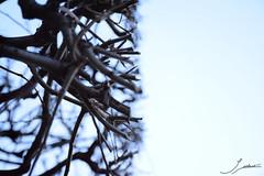 Antinatural nature (Sofiasu91) Tags: paris jeff nature louvre charlie lumiere notre dame nuage pompidou nous koons sommes antinature