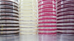 GRN_0177 (David J. Thomas) Tags: media plates dishes gel microbiology agar mannitolsaltagar petriplates macconkeyagar phenylethanolagar eosinemethyleneblueagar phenylethylalcoholagar