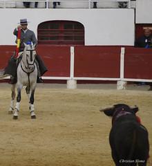 _DSC0428-2 (chris30300) Tags: france les cartagena corrida toro palavas rejon palavaslesflots flots languedocroussillonmidipyrnes languedocroussillonmidipyrn