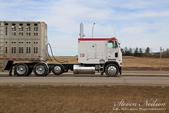 Cabover Freightliner Cattle Hauler (S. Neilson Photography) Tags: 2 canada calgary truck big highway elizabeth cattle semi queen ii alberta rig liner freightliner hauler cabover