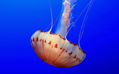 Underwater sea creatures and other animals Wallpapers | SEA LIFE Adventure Backgrounds - Part 10 (PhotographyPLUS) Tags: pictures graphics photos illustrations images stockphotos articles footage stockimage freephoto stockphotograph