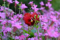 Mixing colors (Radu Andrei B) Tags: bulgaria botanicalgarden balchik