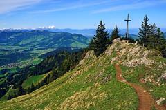 at the top (liebesknabe) Tags: allgu hochhderich hoherhderich nagelfluhkette bregenzerwald sntis schweiz sterreich voralberg berg mountain top gipfekreuz summitcross a5100 ilce5100 sonyalpha selp1650 alpen alps alpstein snow hiking