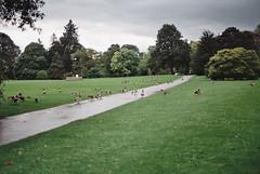Bird Field (RoYaLHigHnEsS1) Tags: park kewgardens plant color canonav1 green london film leaves richmond palm iso greenhouse 200 agfa