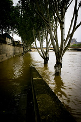 Crue  Paris (Calinore) Tags: seine river inondation fleuve crue