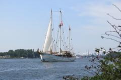 Driemaster Rara Avis tijdens Sail2015 parade in Noordzeekanaal op 19 augustus 2015 (fotografie Molenaar) Tags: amsterdam rara avis noordzeekanaal sail2015