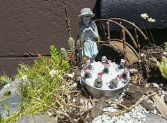 2016-06-07 How does your garden grow? (Mary Wardell) Tags: summer garden succulent grow cellphone figurine nurseryrhyme