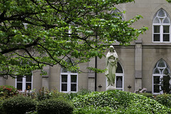 Tempus per annum (Lawrence OP) Tags: tree green leaves garden washingtondc spring cloister immaculata blessedvirginmary dominicanhouseofstudies