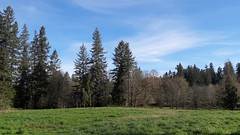 20160331_091524 (ks_bluechip) Tags: creek evans trails preserve sammamish usa2106