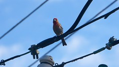 Bird on a wire (soulreaver99) Tags: bird nature sony nex 5t