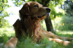 Der Wchter... (lichtflow.de) Tags: dog pet nature canon garden hund sammy garten haustier tier lneburg festbrennweite eos5dmarkiii ef35mmf2usm