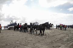 2016-Ameland037 (Trudy Lamers) Tags: wadden ameland eiland paarden reddingsboot reddingsactie