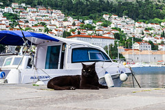 The Boss (E-klasse2010) Tags: sea black animal cat coast pier boat seaside shore dubrovnik