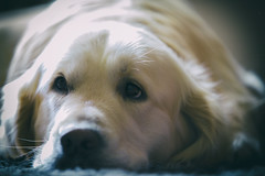 Best friend (Dirk Kelleter Photography) Tags: eos ef canonnederland canon dog light perfect photographer theperfectphotographer