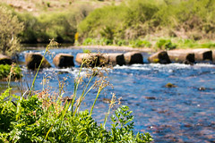 Week Ford, Dartmoor (Keith in Exeter) Tags: uk england plant flower water river landscape nationalpark europe bokeh outdoor depthoffield devon gb steppingstones dartmoor riverdart weekford