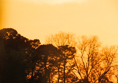 Driving in the Sunset (soniaadammurray - SLOWLY TRYING TO CATCH UP) Tags: trees sunset sky orange nature driving digitalphotography