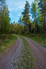 A walk in the forest (paulius.malinovskis) Tags: road trees beautiful forest spring alone shadows sweden sony explore curve scandinavia faraway