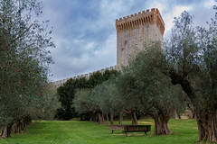 Medieval Tranquility (Casual Explorer) Tags: castle umbria italy medieval olives nikond3300 35mmf18