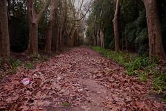 Arboleda ( fOto) Tags: trees tree forest hojas uruguay rboles rbol otoo prado montevideo outono fuga arboleda montevidu uruguai rbore rbores