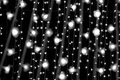 black and white light (daniel_james) Tags: sydney vivid australia nsw royalbotanicgardens 2016 cathedraloflight tamron60mmmacro