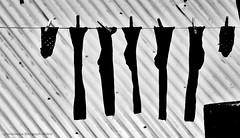 (ojoadicto) Tags: medias socks tendedero tender ropa techo blancoynegro blackandwhite