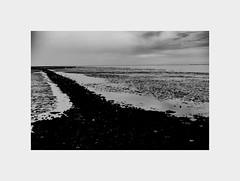 Last year... the Wadden Sea and birds... (l1ze) Tags: blackwhite blackandwhite canon canoneos5dmkii dk danmark denmark hjer jutland jylland monocrome summer syd wildlife birds blackandwhitephoto blackandwhitephotos bw l1ze landscape lastyear lennartjoern people sea seascape sediment sky thewaddensea