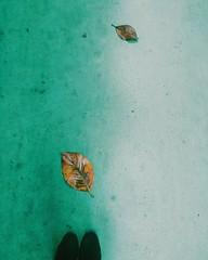 (kasmasan) Tags: autumn green fall colors leaves rain spring lluvia floor regen chove