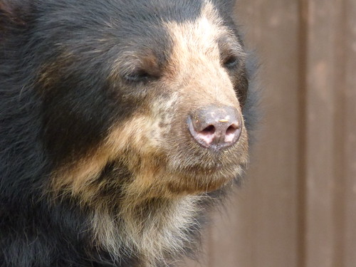 south lakes zoo - honey bear (4)
