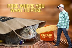 MS_paint81 (PerrySore) Tags: windows up lady cat bag photo kitten paint close with floor image finger ad pussy picture kitty her poker commercial poke software advert microsoft program ms editing campaign perry creating tool app sore modifying exartas
