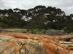 forever's no time at all (idontkaren) Tags: trees orange rocks oz australia blowhole tasmania tassie eastcoast bicheno