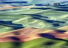 Palouse Daybreak (Gary Grossman) Tags: beauty landscape dawn colorful shadows farm earlymorning farmland hills pacificnorthwest palouse easternwashington steptoebutte garygrossmanphotography shotsofawe