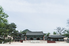 # (David C W Wang) Tags: tree green korea seoul  gyeongbokgung         sel2470z sonya7ii