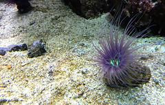 ZooWuppertal_BotanischerGartenRUB 2016_18 (spookybine) Tags: zoo wuppertal animals tiere nature natur underwater unterwasserwelt sea water fish