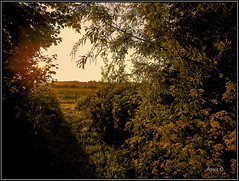 Hole In The Hedge. (Picture post.) Tags: trees sunlight green nature sunrise landscape interestingness shadows hole willow hedge sunburst summertime paysage hawthorne cowparsley