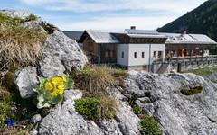 "Nationalpark Gesäuse: Alpine Hut ""Hesshütte"" (1687m) (hl_1001) Tags: austria styria nationalpark gesäuse mountain alpinehut flowers"