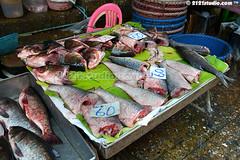 """""""Fish Business"""" (2121studio) Tags: thailand siam travelphotography amazingthailand  travelinthailand khlongtoeimarket  landoftiger landofwhiteelephant thaitourinformation wetmarketinbangkok"""