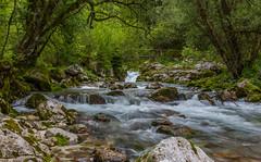 Slovenia / Slowenien: Lepena (CBrug) Tags: tree green nature water creek landscape waterfall wasser wasserfall outdoor natur bach slovenia slowenien grn landschaft baum lepena