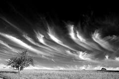 landscape with clouds (christiane.grosskopf) Tags: clouds wolke wolken blackwhite blackandwhite tree landscape schwarzweiss landschaft baum sonyrx100iii sonyrx100m3 germany deutschland sky himmel