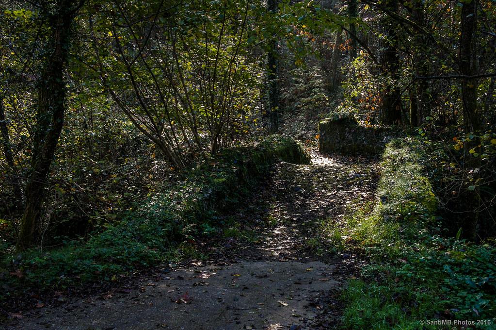 El viejo puente del bosque