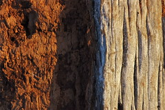 Half 'n half - natural patterns series (Steve Attwood) Tags: wood red newzealand nature canon log pattern rata greymouth naturalpattern