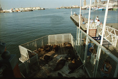 Cape Town South Africa Waterfront Quay Inner Harbour Dec 9 1998 194 Seals at the Harbour (photographer695) Tags: africa town waterfront harbour south capetown quay dec inner cape 1998