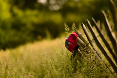 Lazy summer.. (muneeb1988) Tags: summer field grass fence ball aperture nikon soft day f14 background side wide 85mm sunny cap jungle noon shallow depth mid d600 samyang