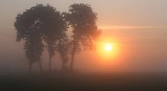foggy sunrise (3) (HansHolt) Tags: trees sun mist fog sunrise bomen zon zonsopgang canonef24105mmf4lisusm canoneos6d infinitexposure