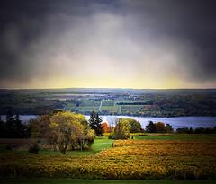 Finger Lakes at Glenora-1 (Jon Meyer Photographic Art) Tags: lake newyork color fall film clouds sunrise unitedstates fallcolors grapes senecalake grapevines viewcamera sheetfilm jonmeyer newenglandstates arcaswiss4x5 jonmeyerphotography jonmeyerphotographicart