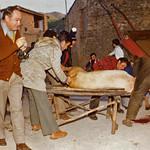 matança del porc-1a2