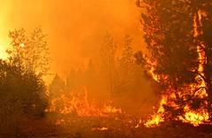 Rim Fire Back Fire Flames (sjrankin) Tags: california trees northerncalifornia forest edited flames yosemite ash yosemitenationalpark processed burned backfire usfs unitedstatesforestservice mikemcmillan tonalcontrast creditmikemcmillanusfs 5september2013