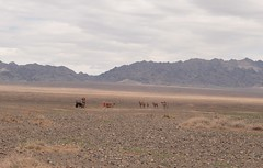 Omnogovi, Mongolia (Myriam Bardino) Tags: mountains desert mongolia camels gobi journeys nomadic gurvan saikhan omnogovi nomadicjourneys